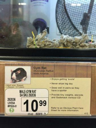 humor pet_shop photo rat sign // 600x800 // 66.0KB