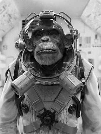 bw chimpanzee photo spacesuit // 550x729 // 67.0KB