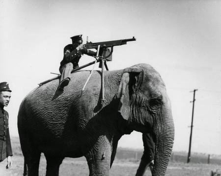be britain elephant gun machinegun photo uniform // 1200x952 // 110.8KB