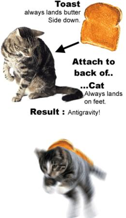 animated cat humor // 269x466 // 54.4KB