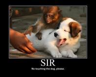 dog monkey motivational no sir // 530x424 // 21.5KB