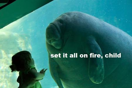 fire macro manatee reaction // 800x537 // 95.8KB