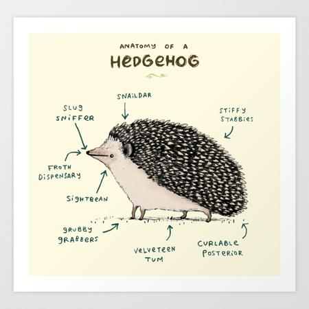 anatomy chart hedgehog // 700x700 // 92.9KB