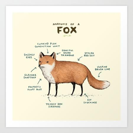 anatomy chart fox // 700x700 // 73.3KB