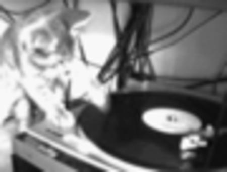 animated bw cat dj // 90x68 // 52.2KB