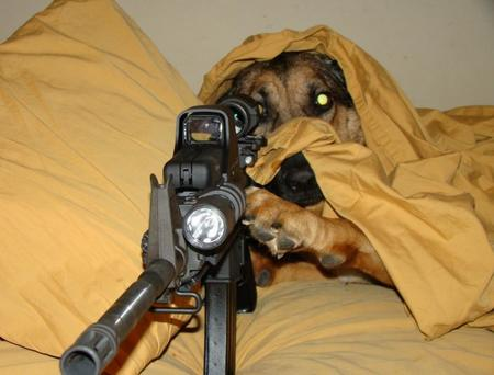 blanket dog photo rifle sniper // 800x608 // 73.7KB