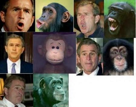 america bush chimpanzee composite monkey necktie photo political republican // 600x472 // 98.7KB